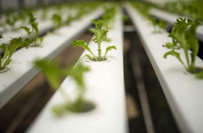 7 Benefits of Hydroponic Farming
