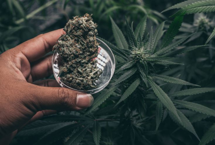 Things to consider when choosing a weed dispensary in Washington DC